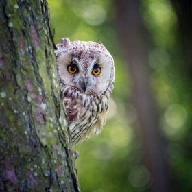 Peek a Boo by Phil Robson