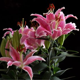 Lillies by Window by Phil Robson