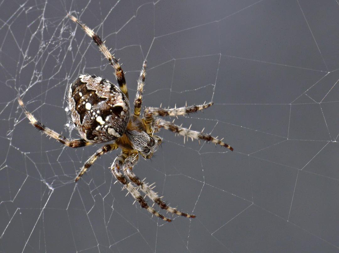 A Web Master by Helen Bradley