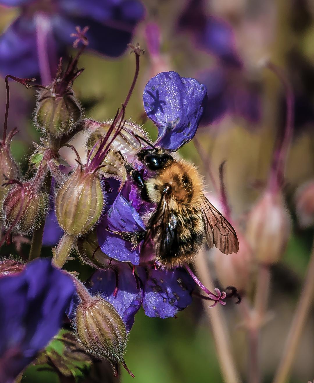 Bee by Fara Serajian