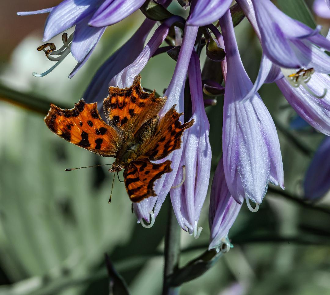Butterfly by Fara Serajian