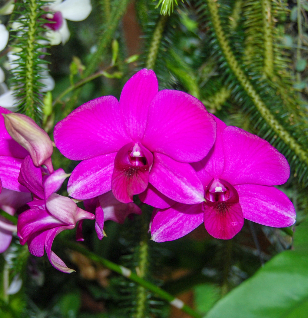 Orchid Paradise by Ian Morton